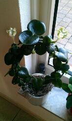 Vreemde plant