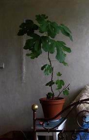 Wie weet welke kamerplant dit is?