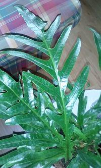 naam van de plant en de verzorging ervan