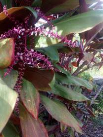 plant met zaaf