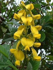 Exotische boom/plant uit west papua/indonesie