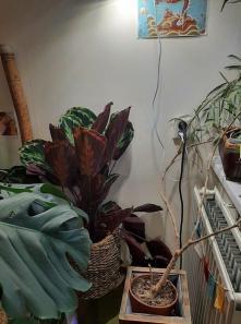 Plant op vaste plek