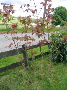 welk soort boom is dit? + foto's