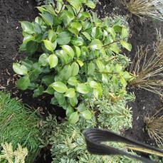 wat voor plant is dit?