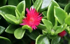 wie weet hoe dit plantje heet