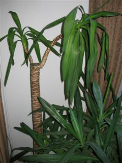 Plant hangt er slapjes bij. Hulp gevraagd.