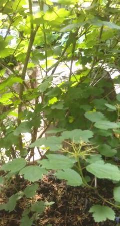 spontaan aangewaaide plant