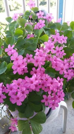 vaste plant