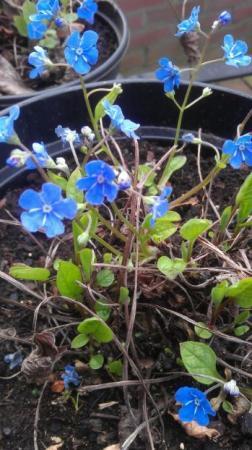 lief bloempje, maar wat is het?