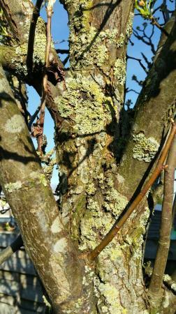 Groene aanslag op boom