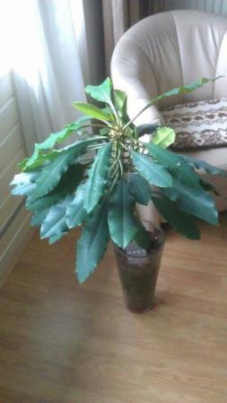 wat voor plant is dit