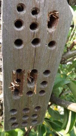 Bijenhotel wordt kapot gemaakt...