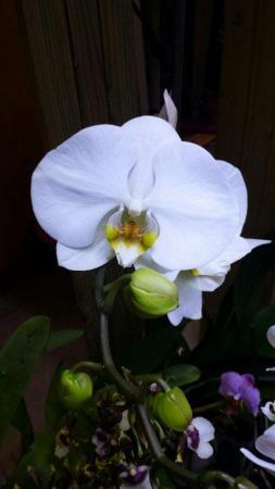 Nieuwe bloei