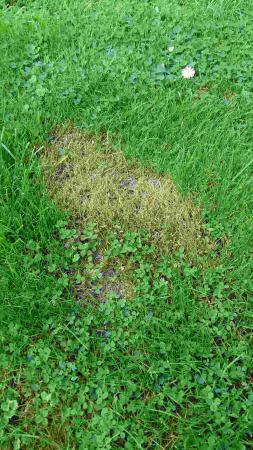 dode plekken in het gras!!