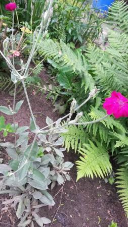 wat is deze bloeiende plant