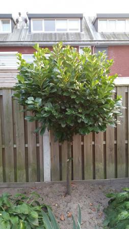Wat voor boompje is dit?