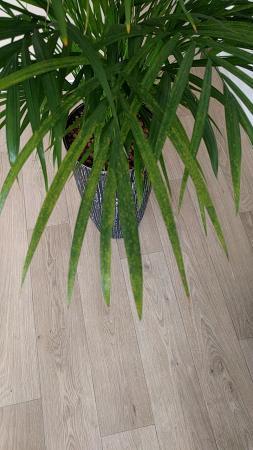 Palm ziek?