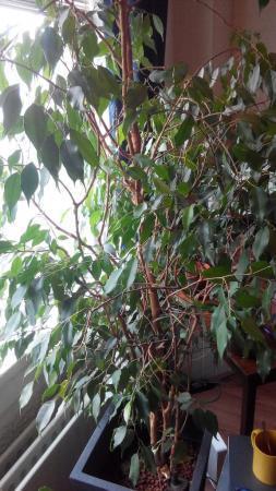 Plant geadopteerd (zou weggegooid worden)