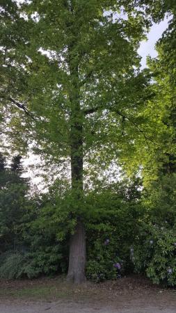 Iemand enig idee welke boom dit is