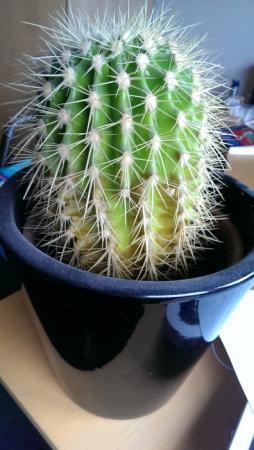 rottende, bruine cactus?