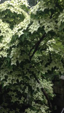 Weet iemand wat dit voor boom is ?