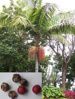 Welke palmen??