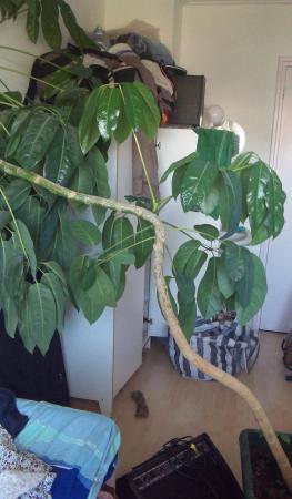 Welke plant en kan ik hem inkorten?