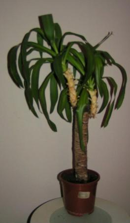 Welke plant is dit en waarom doet hij het slecht?