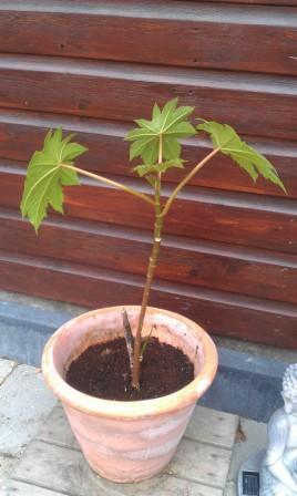 Welke plant is dit ??