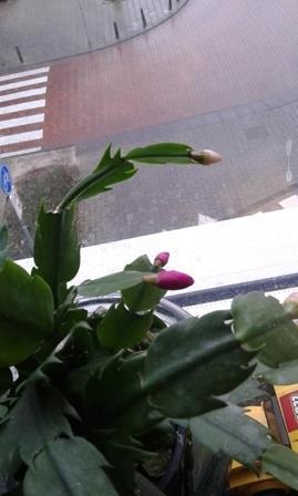 groeit de bloem knop nog ?