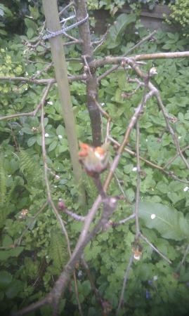 Ziekte appelboom