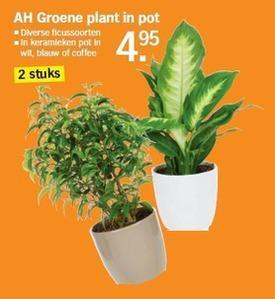 Welke plant is dit en is deze giftig?