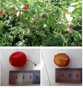 Takje met vruchten en detailfoto's van vruchten