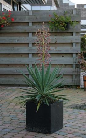Ik ben heel benieuwd naar de naam van deze plant