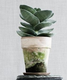 Welke (vet) plant is dit?