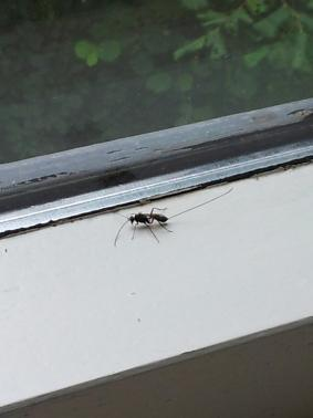 wat is dit voor een insect