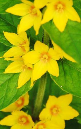 onbekende gele bloem en/of plant