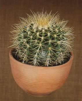 bloemen op cactus