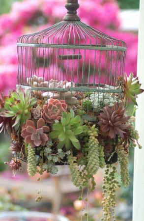winterharde vetplantjes