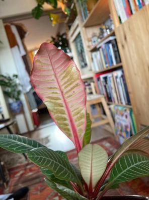 Onderkant blad
