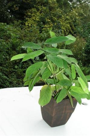 Wat is dit voor plant?