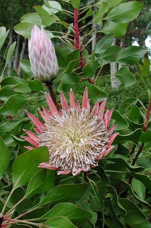 planten/bloemen identificatie