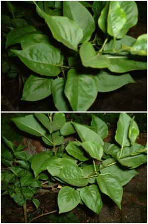 Geredde onbekende plant