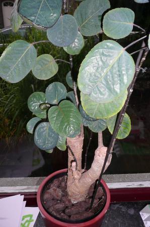 Herkennen van Plant