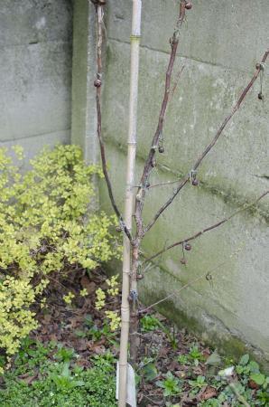 is deze appelboom nog te redden?