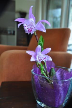 welk soort orchidee
