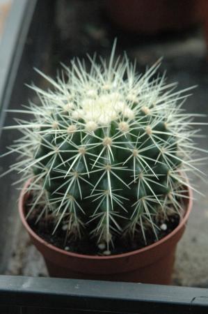 Hoe heten deze cactussen?