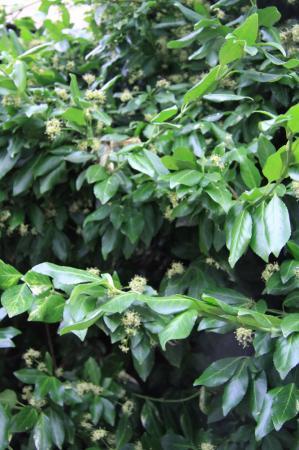 plant naam