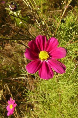 Akkerbloemen