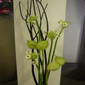 Weet iemand welk bloemetje dit is?